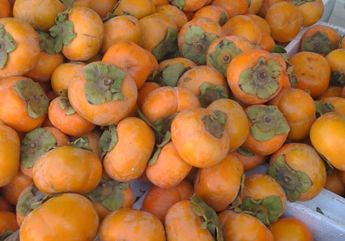 Persimmons at the Hollywood Farmers Market