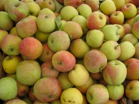 Sea Canyon apples